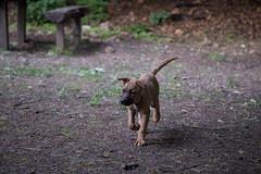 Bibi0516-2052 (adam.leaf) Tags: canon 6d 24105l leafling forest dog