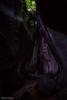 Jungle Mountains (8791) (Stefan Beckhusen) Tags: jungle rainforest mountains tropic gorge ravine nature narrow palms palmtrees fern plantas vegetation rocks green color day outdoors hiking explore discovery bali indonesia tukadcepungwaterfall
