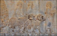 Persépolis, détail de la procession des tributaires (Save planet Earth !) Tags: iran persépolis travel voyage amcc nikon