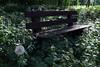 Pusteblume (III) (dididumm) Tags: spring evening bench eveninglight dandelion commondandelion taraxacumofficinale weeds flowers blumen unkraut löwenzahn pusteblume abendlicht bank abend frühling