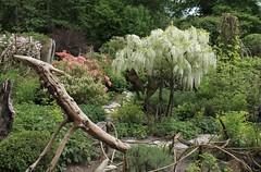 jardin instinctif (bulbocode909) Tags: vaud suisse noville grangettes jardininstinctif jardins arbres fleurs végétation troncs printemps vert rouge