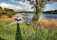 Sunset (denismartin) Tags: green spring france vosges vosgesmountain lorraine grandest tree flower lake bouzey sanchey epinal water shadow sunsetlight denismartin europe