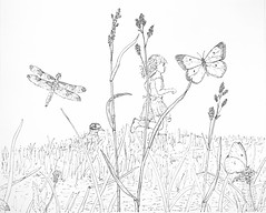 MeadowRun (Alex Hiam) Tags: meadow girl running spring bird dragonfly butterfly grass hay pen ink illustration drawing