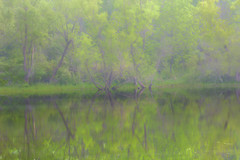 Green (wdterp) Tags: fog foggy morning green pond reflections