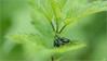 LR7-PEM51343 (JB89100) Tags: 2018 insectes moulinatan sens ou quoi