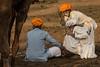 Conversations Pushkar Mela. Rajasthan (Tito Dalmau) Tags: rabari man conversation camels fair mela pushkar rajasthan india
