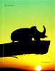 Rhino beetle (guitarmargy) Tags: silhouette macro controluce oryctes nature male coleottero insects animal wildlife marcellobardi sunset tramonto closeup