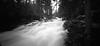 (facenorth) Tags: holga120wpc mediumformat 120film pinholephotography pinholecamera selfdeveloped negative bw blackandwhite kodakhc110 ilfordpanf50 waterfall duchesnayfalls northbay filmisnotdead ishootfilm nature toycamera longexposure lomography lomo
