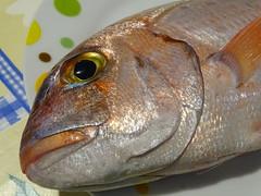 Paolotto (RoBeRtO!!!) Tags: rdpic sea fish eye food pesce mare occhio cibo paolotto pagellofragolino pagelluserythrinus macro closeup sonyhx400v