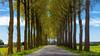 Battenoordsedijk Nieuwe-Tonge (BraCom (Bram)) Tags: 169 battenoordsedijk bracom bramvanbroekhoven goereeoverflakkee holland nederland netherlands nieuwetonge southholland zuidholland boerderij bomen cottage farm foliage frühling gebladerte huisje landschap lente printemps road sky spring trees weg widescreen nl