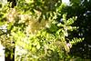 1PRO_0551 (Radu Pavel) Tags: radu radupavel pavel fotononstop cosmos ©radupavelallrightsreserved ©radupavelallerechtevorbehalten ©radupaveltodoslosderechosreservados ©radupavel版権所有 spring frühling primavera 春 nature natur naturaleza 自然 colours farben colores 色 tree baum árbol 木 2018 木漏れ日