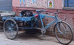 Doge Bike Varanasi DSC_8284 (JKIESECKER) Tags: varanasiindia india varanasi streetscenes dogs bicycle travel transportation blue sleep animals animalportrait