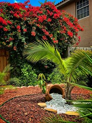 Urban Spillage (LarryJay99 ) Tags: nature palmtree urbanfoliage urban container script potted plant street furniture los olas ft lauderdale florida 2018 fence bougainvillea