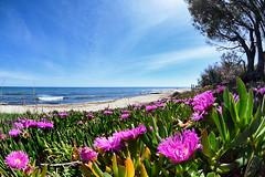 Fleurs-sur-la-plage (RS...) Tags: corse plage fleurs beach flowers d7200