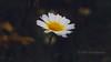 || F L O W E R || (nazmul3g) Tags: flower flowers flowerclickz floral flowerphotography flora floweroftheday flowermagic flowerstagram flowerslovers light streetclick streetphotography streetphoto streetsideflower mnphotography mnclickz flicker community