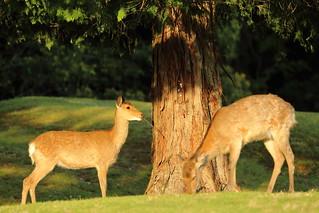 Feeding the bark of tree