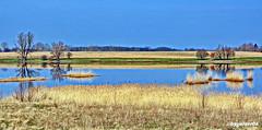 Landschaftspanorama (garzer06) Tags: landschaft schilf spiegelung landschaftsbild deutschland landschaftsfoto mecklenburgvorpommern naturphoto naturphotography inselrügen melnitz landscapephotography naturfoto insel naturfotografie rügen landschaftsfotografie