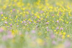 impressionisme (Patatitphoto) Tags: lauragais flore