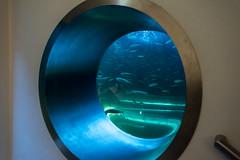 Wien 2017 - Haus des Meeres (karlheinz klingbeil) Tags: water wasser tier animal austria aquarium city zoo vienna österreich stadt wien at