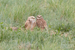 May 13, 2018 - A nice looking couple at the Rocky Mountain Arsenal. (Tony's Takes)