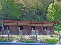 18050718742valtrebbia (coundown) Tags: gita tour statale stradastatale 45 ss45 valtrebbia trebbia natura boschi verde fiume