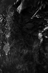 Sound of silence (Rachelnazou) Tags: caffenol blackwhite analog argentique minolta film fomapan