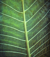 Green (vittorio.chiampan) Tags: leaf green nature fineart art abstract