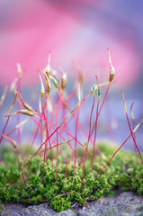Sticks (ErrorByPixel) Tags: pentaxart nature plant blur errorbypixel macro moss pentax k5