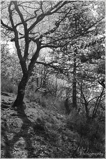 Springing Tree