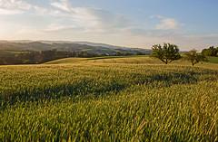 Morgenstund' im Mühlviertel (rubrafoto) Tags: mühlviertel morgenstunde morgensonne morgenlicht tagesanbruch morgengrauen landschaft frühling landwirtschaft grünland hügelland herzogsdorf ooe a