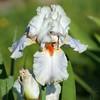 Iris (Shutter_Hand) Tags: texas usa miguelmendozamuñoz clarkgardens botanicalpark weatherford mineralwells secretgarden parquebotánico jardinbotánico botanico jardin jardinsecreto texasgem texasjewel minoltaaf75300mmf4556 bigbeercan sony alpha a99 sonyalphaa99 slta99