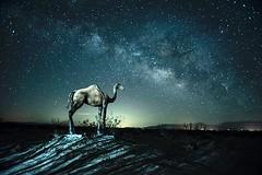 Dromedary Dream (edwham) Tags: night nightphotography longexposure nocturne camel art sculpture skyart milkyway stars astralphotography borregosprings california desert ricardobreceda
