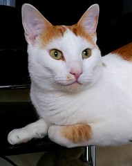 Happy Weekend... (Lindsaywhimsy) Tags: cat portrait pet indoors