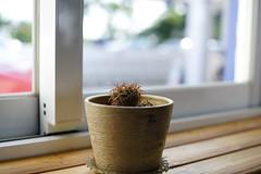 仙人掌 (moseskim27) Tags: taiwan hukou f2 t carlzeiss cactus contaxg45mmf2planar planar 山丘上景觀咖啡館 湖口