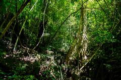 Khao sok rain forest (Toma.Marinov) Tags: khao sok rain forest thailand