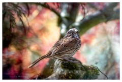 Under tree's canopy (Krasne oci) Tags: bird nature songsparrow trees evabartos artphotography texturedphoto