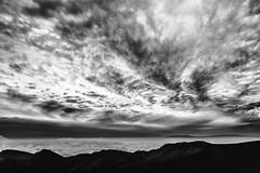 An Unfair Study in Survival (Thomas Hawk) Tags: america haleakala haleakalacrater haleakalānationalpark hawaii maui usa unitedstates unitedstatesofamerica bw sunrise volcano kula us fav10