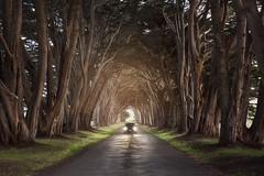 California Cyprus Tree Tunnel (ks_pics) Tags: road california cyrpresstreetunnel landscape car trees travelphotography kspics
