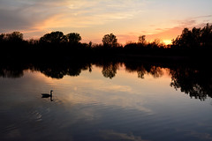 Peaceful Easy Feeling (NaturalLight) Tags: sunset water reflections goose peaceful chisholmcreekpark wichita kansas