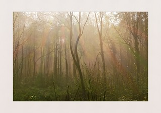 Colour in the Mist