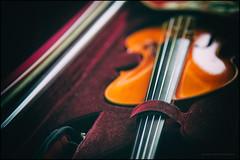 Waiting to be played (G. Postlethwaite esq.) Tags: bankholiday dof eastermonday beyondbokeh bokeh crapweather depthoffield fingerboard misearable musicalinstrument photoborder rain selectivefocus shite strings violin