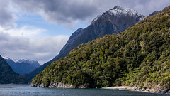Trees and mountains (milo42) Tags: 2014 new zealand milford httpwwwloveoflandscapecom httpwwwchrisnewhamphotographycouk south island boat location mountain lake sound milfordsound newzealand southisland fiordlandnationalpark southland nz