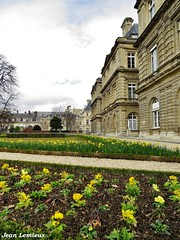 Jardin du Luxembourg (JeanLemieux91) Tags: luxembourg jardin jonquilles jaune yellow amarillo flowers flores fleurs paris îledefrance france mars march marzo hiver winter invierno 2017