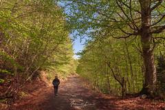 Disfrutando de la primavera (Alberto Lacasa) Tags: spring hojas arbol bosque person walking outdoor paseo orange primavera persona color tree mountains forest trekking walk senderismo green naranja leaf colores verde