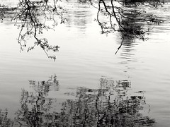 Reflections (A blond-Tess) Tags: 365days 365project 365photochallenge dailyphotochallenge dailychallenge reflectioninthewater reflections refelction water riverklaralven riverklarälven nature simplicity serenity serene blackwhite blackandwhite monochrome mono