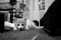 (monzack) Tags: cat black white blanco negro monocromo monochromatic