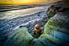 Model Sea Lion (Manuela Durson) Tags: beach california cliffs lajolla sea lion sealion seal wildlife shore animals ocean seascape la jolla san diego