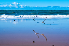 Deep blue (f.concord) Tags: beach coast sea blue sand water seagulls clouds sky