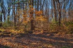 Autumn Refresh (Modkuse) Tags: nikonfx intimatelandscape autumn autumnlandscape fall fallcolors landscape nature leaves colors fallcolor nikon nikondslr nikond700 tokina tokinaaf2870mmf2628