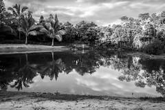 REFLECTING ON NAÃA (LA GRANDE TERRE) Tags: bw bbq beach blackwhite canon efs1855mmf3556isii eos1300d longexposure monochrome naia newcaledonia nouvellecaledonie paita picnic pond provincesud reflections sand southprovince stillwaters welderglass